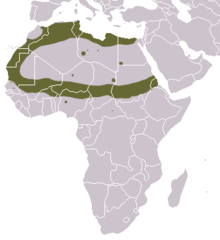 Saharan Striped Polecat area.png