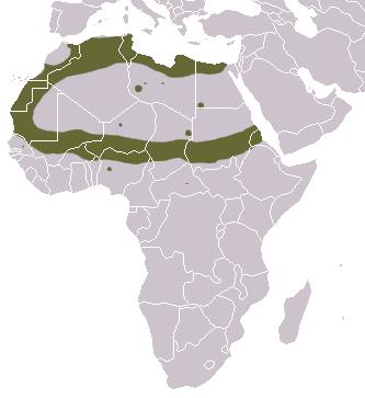 Saharan Striped Polecat area