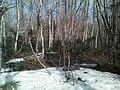 Sakhalin's nature. 07.jpg