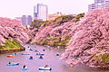 Sakura blooming over a river in Chiyoda, Japan; March 2016.jpg