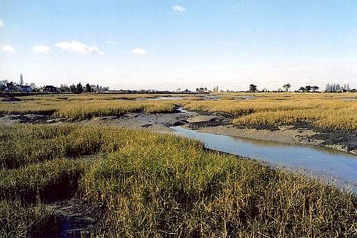 Salt-marsh Chidham 5.2.2003