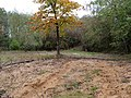 Sandbox in the Hambach forest 01.jpg