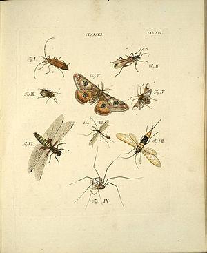 Jacob Christian Schäffer - Plate from Elementa entomologica