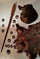 Schalksmühle-Jagdmuseum-4-Asio.jpg