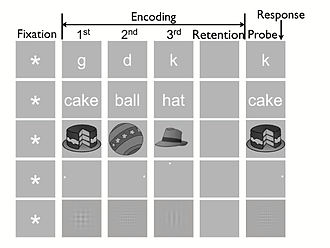 Triarchic theory of intelligence - Schematic illustrating one trial of each stimulus pool in the Sternberg task: letter, word, object, spatial, grating.