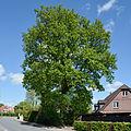 Schleswig-Holstein, Borstel-Hohenraden, Naturdenkmal 36-05 NIK 3335.JPG