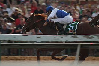 Shackleford (horse) - Shackleford in the 2011 Preakness Stakes.