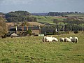 Sheep on Hadrian's Wall National Trail - geograph.org.uk - 1023609.jpg