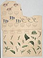 Sheet of flowers and leaves) - on stone by J. Ackerman LCCN2015645694.jpg