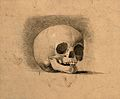 Skull. Pencil and chalk drawing by C. Landseer(?), or a cont Wellcome V0008293.jpg
