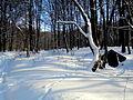 Snow14Slovakia5.JPG