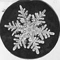 Snowflake Study (5243831090).jpg