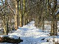 Snowy footpath among the chestnut trees - geograph.org.uk - 1763055.jpg