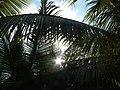 Sol a través de palmas.jpg