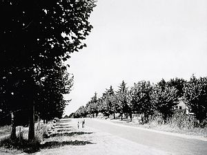 Somerville, Victoria - The original avenue of honour in the 1950s lining Eramosa road East with Plane Trees.