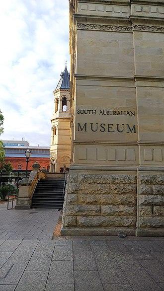 South Australian Museum - South Australian Museum