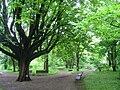 Späth-Arboretum - May 2010 - IMG 8808.JPG
