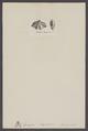 Spirigera - Print - Iconographia Zoologica - Special Collections University of Amsterdam - UBAINV0274 005 13 0014.tif