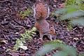 Squirrel In Central Park (3618401549).jpg