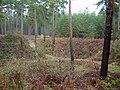 Squirrel Scamper Pit 2, Downham Highlodge Warren - geograph.org.uk - 100771.jpg