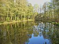 Stahnsdorf - Teich (Pond) - geo.hlipp.de - 35349.jpg
