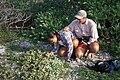 Starr 990412-0417 Solanum nelsonii.jpg