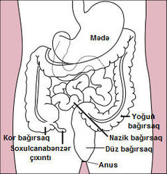 Stomach colon rectum diagram az.jpg
