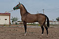 Studfarm in Turkmenistan - Flickr - Kerri-Jo (107).jpg