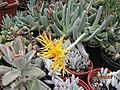 Succulents (4509153146).jpg