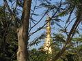 Sule Paya Through the Trees (8396767758).jpg