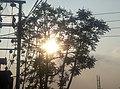 Sun between the trees.jpg