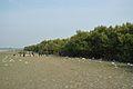 Sundarban Biodiversity and Interpretation Area - Taki - North 24 Parganas 2015-01-13 4708.JPG