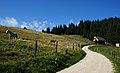 Sunnseiten Hütte, Goding, Gemeinde Sankt Andrä i.Lavanttal, Bezirk Wolfsberg, Kärnten.jpg