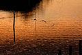 Sunrise 2008-11-17 (3037809454).jpg
