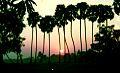 Sunset.64.jpg
