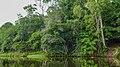 Suriname river near Bergendal (33408953271).jpg