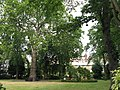 Sussex Square, W2 - geograph.org.uk - 1517643.jpg