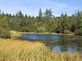 Swamp lake Balarus.jpg