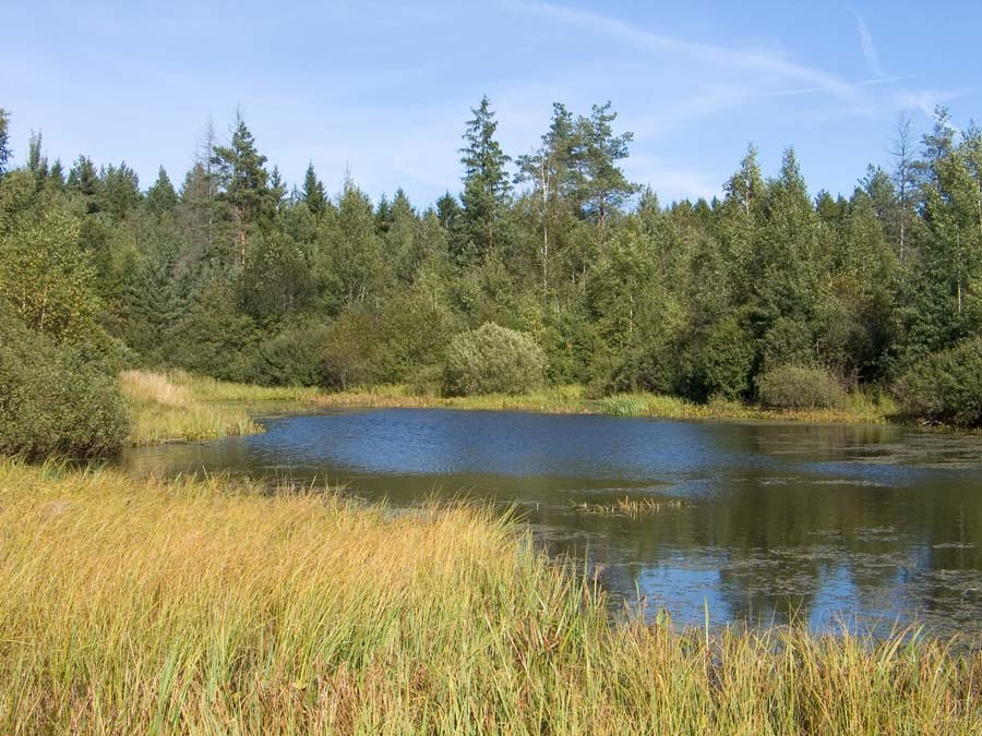 Swamp lake Balarus