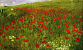 Szinyei Merse, Pál - Meadow with Poppies - Google Art Project.jpg