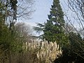 Tall grass and trees in Holland Park - geograph.org.uk - 1230095.jpg
