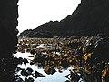 Tangle near Lang Craig - geograph.org.uk - 1460902.jpg