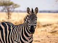 Tanzania - You talkin' to me? (11087524144).jpg