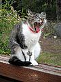 That is a wide yawn (5062963659).jpg