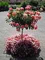 The Butchart Gardens (16.08.06) - panoramio - sergfokin (7).jpg