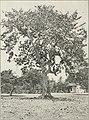 The Cuba review (1907-1931) (20804815135).jpg