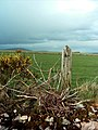 The Fence Post - geograph.org.uk - 435751.jpg