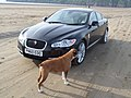 The Jag with Micha the Boxer Dog at Brean (14114959005).jpg