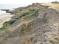 The Naze, Cliff erosion (1) - geograph.org.uk - 1479295.jpg