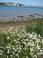 The Torridge Estuary - geograph.org.uk - 1355602.jpg
